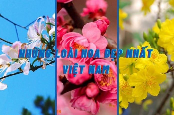 những loài hoa đẹp nhất VIệt Nam