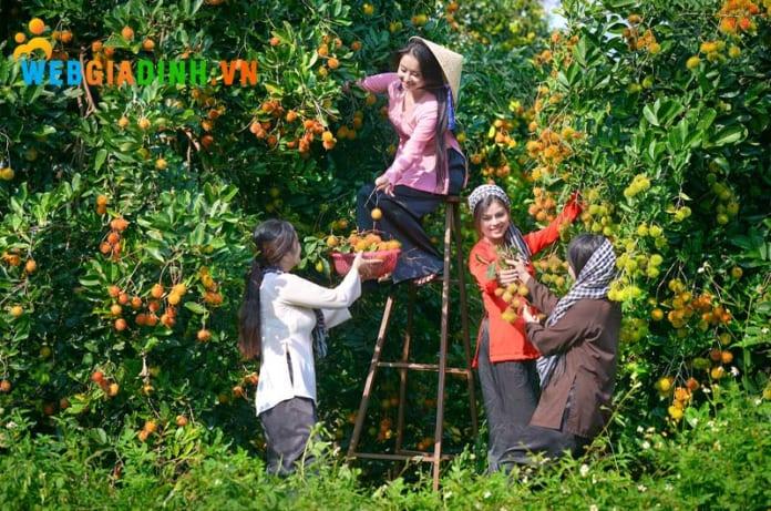 trái cây miệt vườn